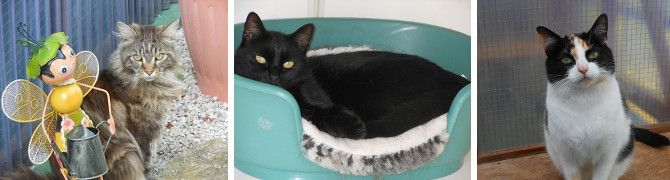 Cats enjoying their stay at Kopperkins Boarding Cattery